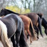 Verkaufspferde in fast allen Farben