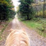 Weitläufige Reit- und Waldwege