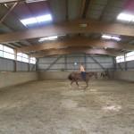 Gymnastizierung an der Longe oder unter dem Reiter