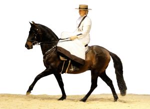 """Destino auf der """"Pferd & Jagd"""" 2018, Bild: Nadine Schumacher"""