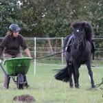 Pferd, Schubkarre und Sektglas = Multitasking